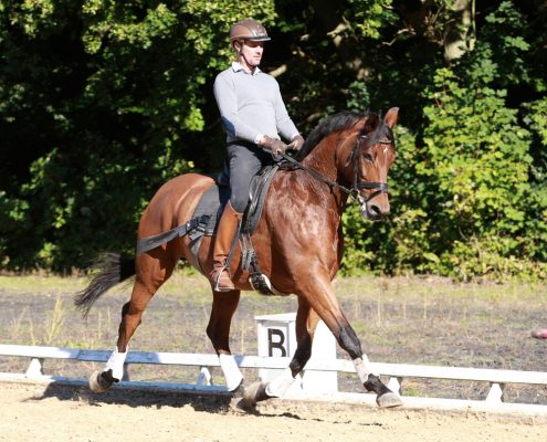 Claus_Toftgaard_rider_fint_med_Equiband